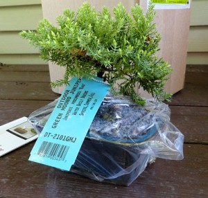 Proflowers Bonsai instructions