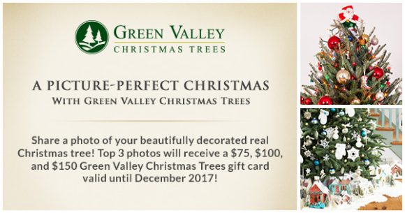 Green Valley Christmas Trees A Picture-Perfect Christmas Giveaway