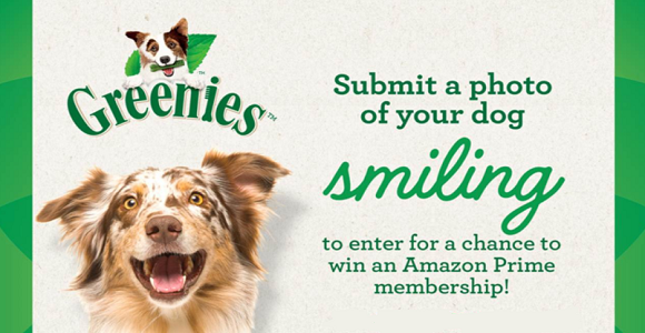 QUICK ENDING! Greenies Amazon Prime Membership Giveaway