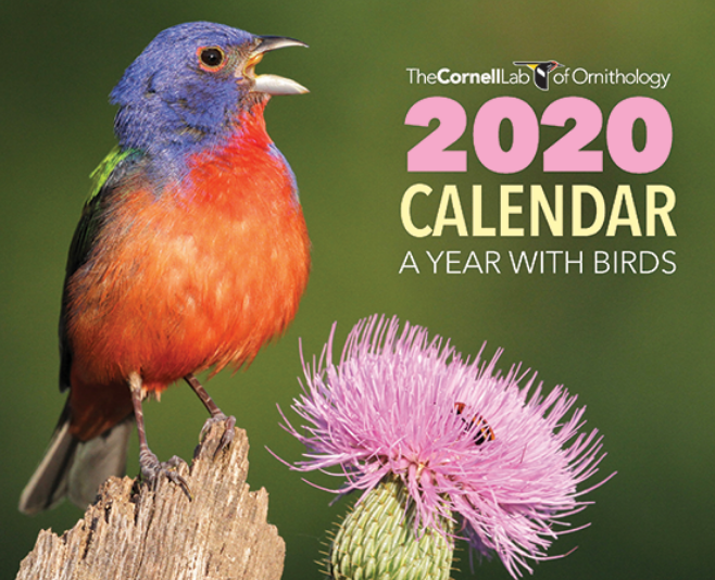 FREE 2020 Cornell Lab A Year with Birds Calendar