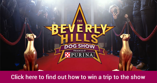 """Enter for your chance to win a trip for two and your dog to New York City to appear on the TODAY Show and take place in a """"Best in Show"""" competition with other Semifinalists to win the ultimate prize, a trip for two to the Beverly Hills Dog Show presented by Purina in Los Angeles, California."""
