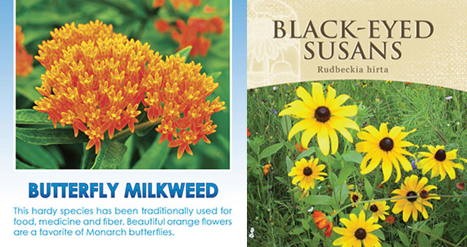 FREE Black-Eyed Susans & Butterfly Milkweed Seed Packets