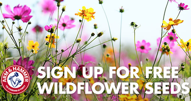 FREE Wildflower Seed Card from Arm & Hammer