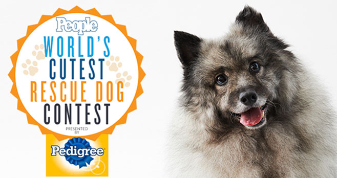 Enter to win a one year supply of Pedigree dog food from People magazine. Share a photo of your dog and explain how adopting a pet changed your life - and theirs. Don't forget to give a shout out to the rescue organization that helped you find your canine companion. Dogs of all shapes, sizes and ages are welcome.