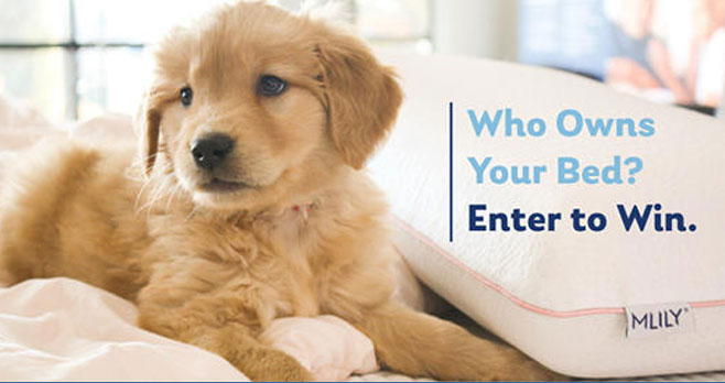 """Who owns the bed? You or your pet? Share a photo of your pet in bed using #MLILYPETDAY for a chance to win a new """"people-sized"""" bed! Share this post and be sure to follow our page. The winning photo will be featured on April 11th for National Pet Day."""