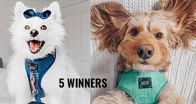 Enter for your chance to win a $50 SassyWoof.com Gift Card. Five winners will be chosen. Enter daily from March 18, - April 9 to improve your chances