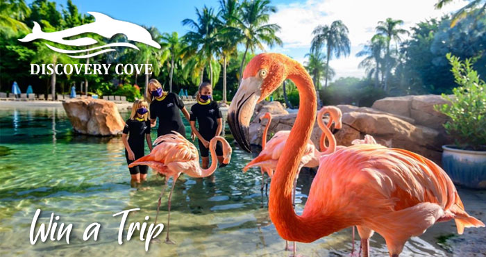 Enter for your chance to win a Trip for four to Discovery Cove in Orlando, Florida. All you need to do is share why you're ready for an escape with a photo and use #EscapeToDiscoveryCove #Contest